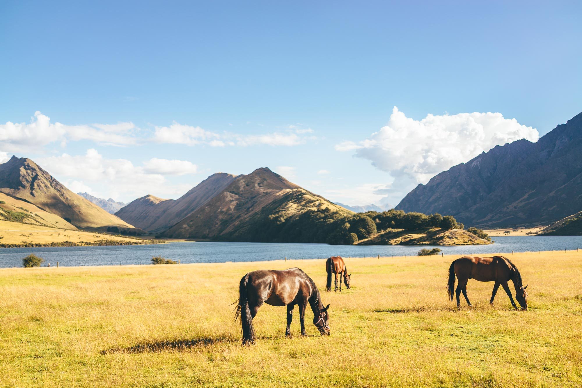 Horses eating a field next to Moke Lake in Queenstown