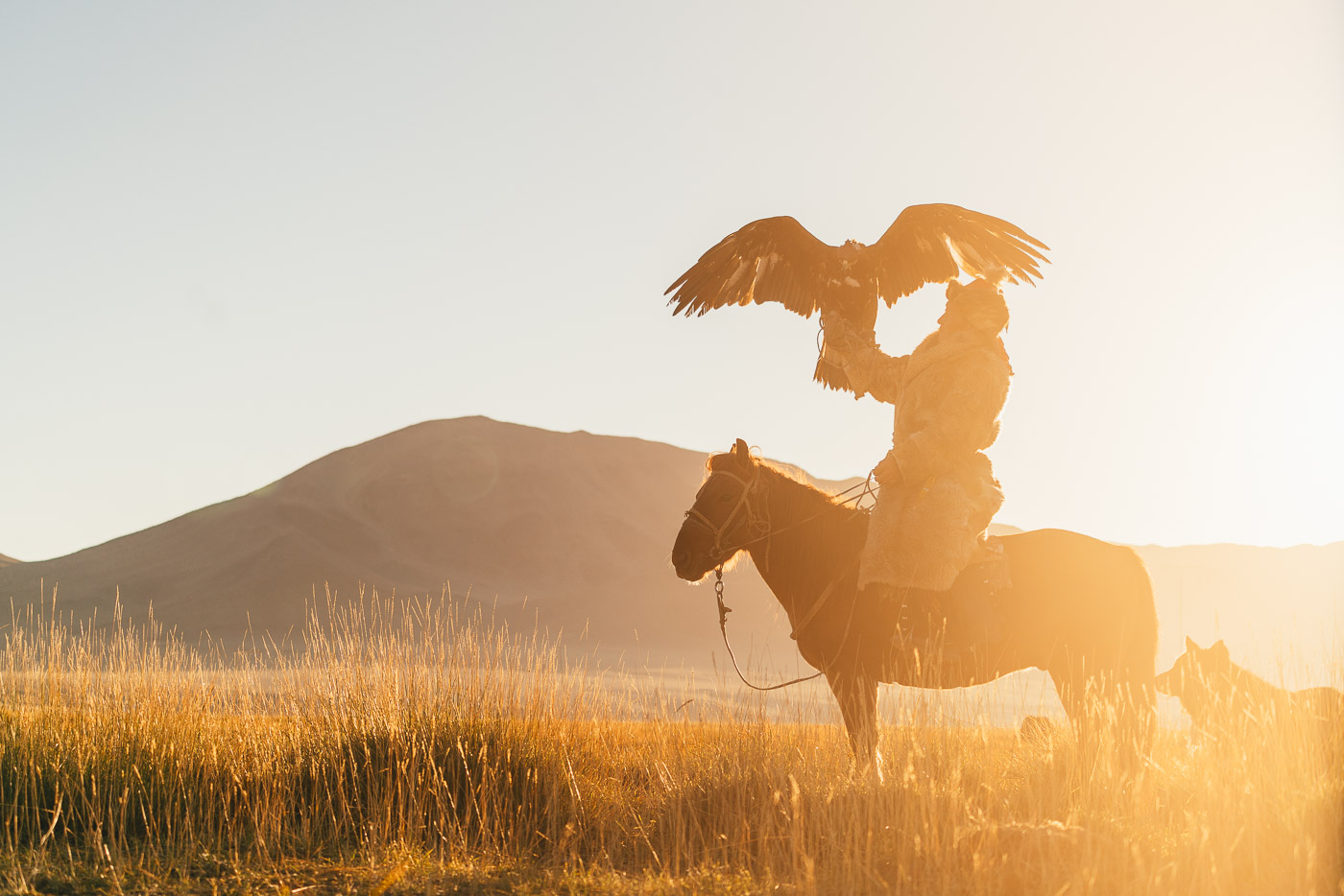 kazakh eagle hunting on a horse during sunset in Mongolia
