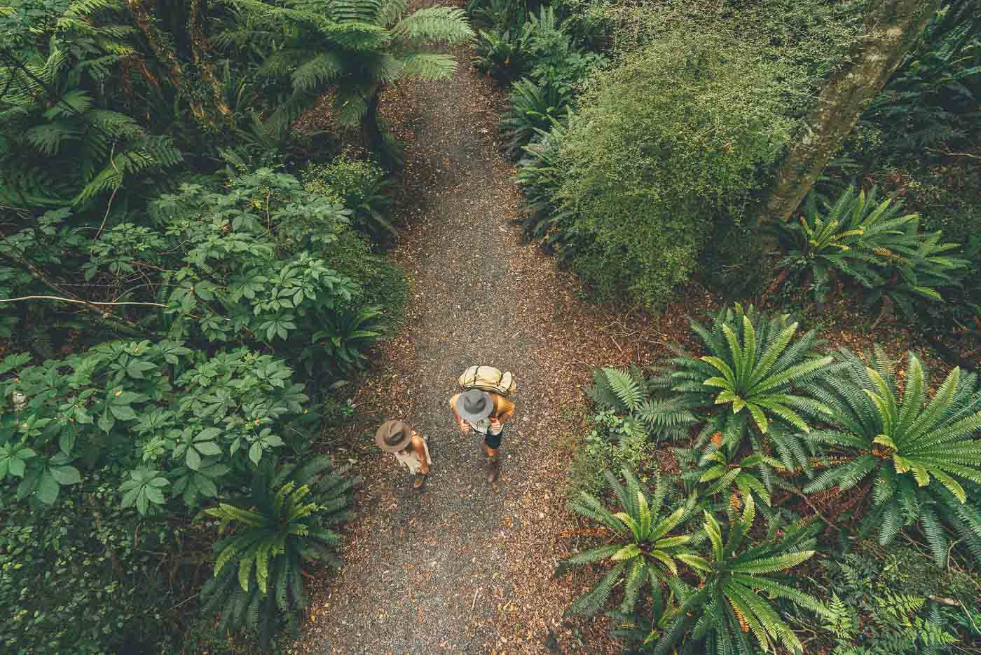 Couple walking through New Zealand's forest