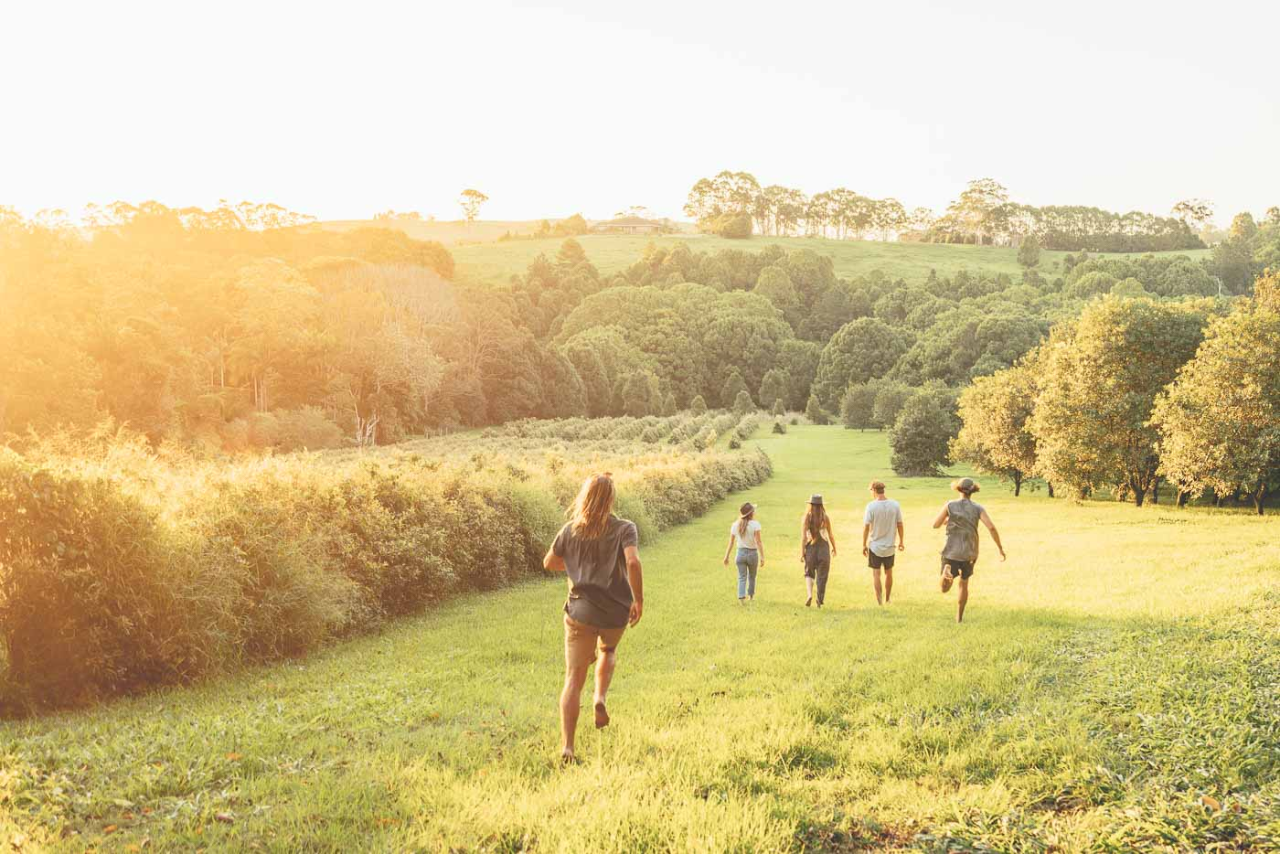 group of friends walking through orchard at Byron Bay, Australia